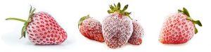 Astuces - Comment congeler la fraise